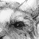 Detail of Drawing of Kangaroo 47 A by Michael Chorney