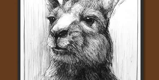 Drawing of Kangaroo 40