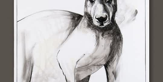 Kangaroo drawing 1 by Michael Chorney