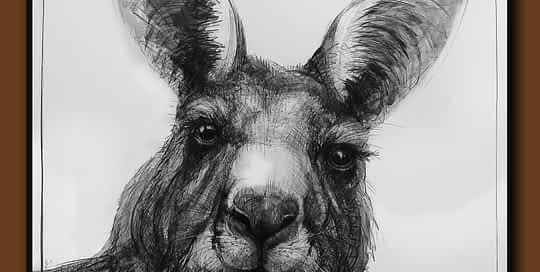 Drawing-of-Kangaroo-48-D