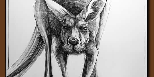 Drawing-of-Kangaroo-50 by Michael Chorney