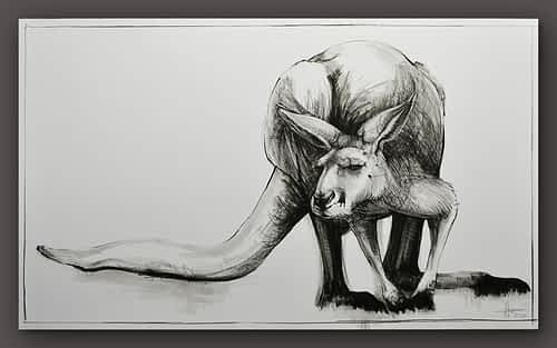 Drawing of Kangaroo No. 22