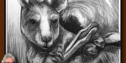 Drawing-of-Kangaroo-56-with Michael Chorney
