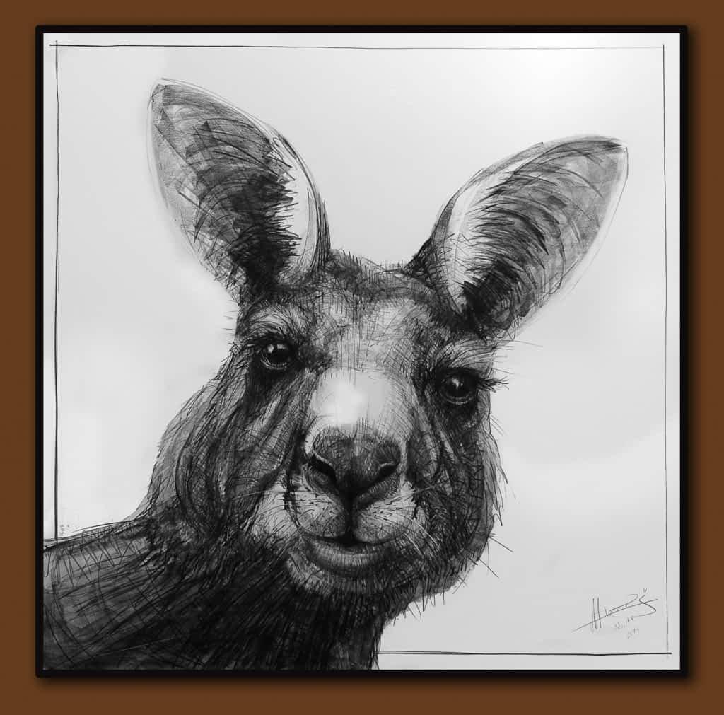 Drawing-of-Kangaroo-48-D