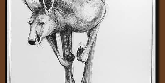 Drawing-of-Kangaroo-53 with Michael Chorney