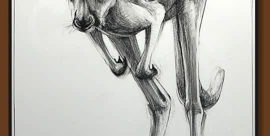 Drawing-of-Kangaroo-55 with Michael Chorney