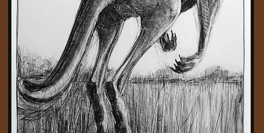 Drawing-of-Kangaroo-52
