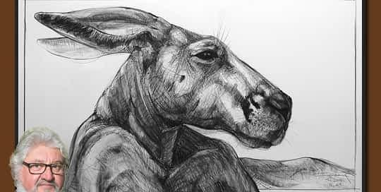 Drawing of Kangaroo 43