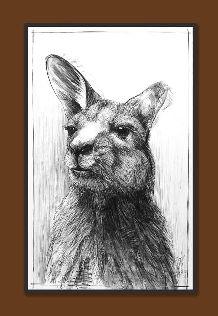 Drawing of Kangaroo 40