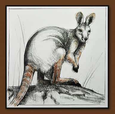 Drawing of Kangaroo No. 41