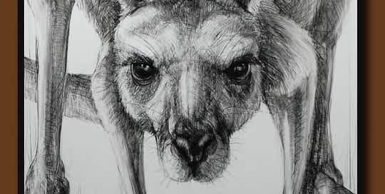 Drawing of Kangaroo 57 with Michael Chorney