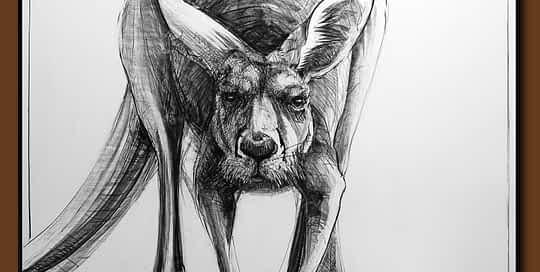 Drawing-of-Kangaroo-50 by Michael Chorney