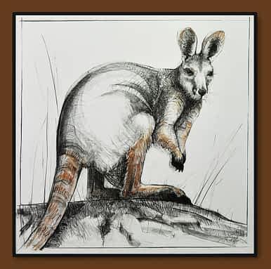 Drawing of Kangaroo No. 41