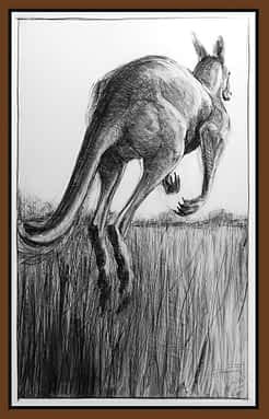 Drawing of Kangaroo No. 52